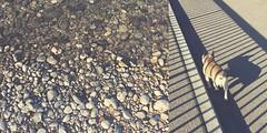 46/365 river walk (SarahLaBu) Tags: stones steine rhein rhine frenchbulldog dog hund shadows schatten diptych diptychon 365the2017edition 3652017 day46365 15feb17 iphone6s