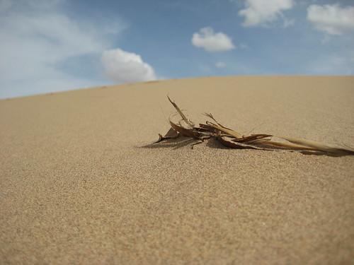 Пески....