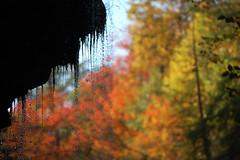 Overhang, droplets, and foliage I