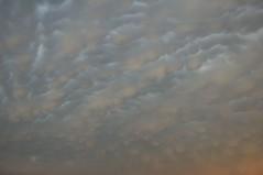 052606 - Awesome Nebraska Mammatus (NebraskaSC Severe Weather Photography Videography) Tags: sky storm nature weather clouds training warning landscape photography nebraska day extreme watch chase tormenta thunderstorm cloudscape stormcloud orage darkclouds darksky severeweather stormchasing wx stormchasers mammatus darkskies chasers reports stormscape skywarn stormchase awesomenature southcentralnebraska stormydays newx weatherphotography daystorm weatherphotos skytheme weatherphoto stormpics cloudsday weatherspotter nebraskathunderstorms skychasers weatherteam dalekaminski nebraskasc nebraskastormchase trainedspotter cloudsofstorms