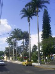 praça palmeira imperial de echapora nilceia gazzola nilgazzola brasil brazil (nilgazzola) Tags: cidade de foto sp ou com tirada maquina echapora gazzola nilceia nilgazzola exapora