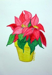 Christmas Pointsettia