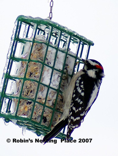 Suet-on-Ice