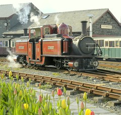 Springtime, Ffestiniog Railway, Porthmadog, Wales, April 7, 2004 (Ivan S. Abrams) Tags: arizona tulips ivan nikond100 eisenbahn trains getty portmeirion abrams railways trainspotting gettyimages railroads ffestiniog trens dampflok steamtrains smrgsbord porthmadog tucsonarizona englishheritage steampowered ferrovie chemindefer steampower steamlocomotives oldtrains englishspring narrowgaugerailways preservedrailways railfans 12608 touristrailways ukrailways railwaypreservation railwayenthusiasts movingtrains onlythebestare internationalrailways welshholidays 2footgaugerailways ivansabrams trainplanepro pimacountyarizona safyan arizonabar fairliepatentlocomotives preservedlocomotives arizonaphotographers railwayexcursions ivanabrams specialtrains welshnarrowgaugerailways railwaysofgreatbritain railwaysofwales sportsmanhotelporthmadogwales cochisecountyarizona railroadexcursions railwaytouringcompany locomotivesavapeur locomotivesavapore ferriovia restoredlocomotives trainsaroundtheworld tucson3985 gettyimagesandtheflickrcollection copyrightivansabramsallrightsreservedunauthorizeduseofthisimageisprohibited tucson3985gmailcom ivansafyanabrams arizonalawyers statebarofarizona californialawyers copyrightivansafyanabrams2009allrightsreservedunauthorizeduseprohibitedbylawpropertyofivansafyanabrams unauthorizeduseconstitutestheft thisphotographwasmadebyivansafyanabramswhoretainsallrightstheretoc2009ivansafyanabrams