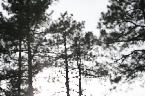 Tree-o I