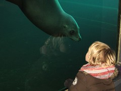 Close Encounter (Vineyards) Tags: water amsterdam animal children zoo child play nederland thenetherlands communication contact artis dierentuin californiasealion zeeleeuw