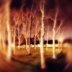 (parade in the sky) Tags: longexposure trees nature strange grass night photoshop outdoors lights surreal blurred spinning ethereal swirl dreamlike atmospheric foothillcollege gauzy