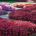 Jardín de Flores El Capricho