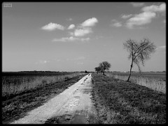 Long walks back (Shima Hitotsu) Tags: trees winter bw italy landscape noiretblanc fields friuli 10faves 123bw platinumphoto anawesomeshot