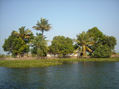 backwaters (Roberta Tura) Tags: india green water bakwaters