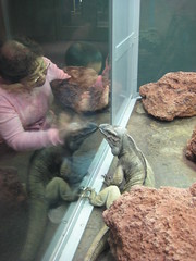 Iguana likes me
