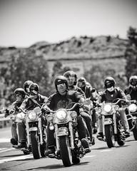 Junee Poker Run 2008 (cyoung) Tags: charity bw bike harley motorbike harleydavidson vtwin hog 2008 junee pokerrun vpower cancerassist