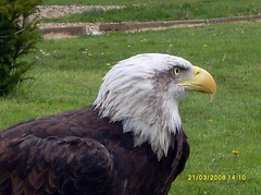 Eagle at Cabarceno zoo (Abi Skipp) Tags: eagle