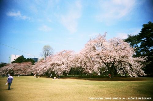 vivitar 櫻花