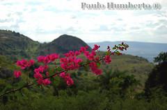 Vermelho. (PAULO HUMBERTO) Tags: paisagem salveanatureza