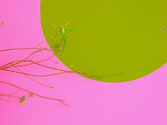 bright (trAvelpig) Tags: africa pink green wall paint botswana twigs coolpix8800 maun travelpiginterestingness bushmancraftshop