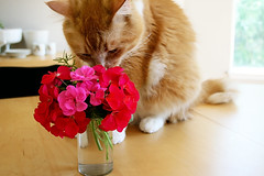 Cat Sniffing Flowers