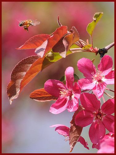 عکس زیبا از گل