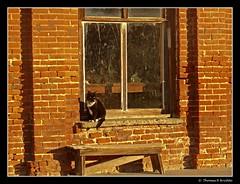 Our Model,   Dechambeau Hotel  Bodie CA. (tom911r7) Tags: california leica cat bodie tom911r7 vlux1 thomasbrichta ghosttown