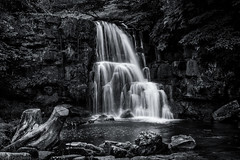 Where the faerie folk dwell (Anthony P26) Tags: category catrakeforce england keld landscape northyorkshire places travel waterfall yorkshire longexposure whitewater silkwater silkywater fall force rocks river pond pool timber trees trunk wetrocks blackandwhite blackwhite whiteandblack bw unitedkingdom uk english britain greatbritain british countryside rural canon canon550d canon1585mm riverlife stream outdoor natural tree stump treestump treetrunk water creek woods monochrome forest