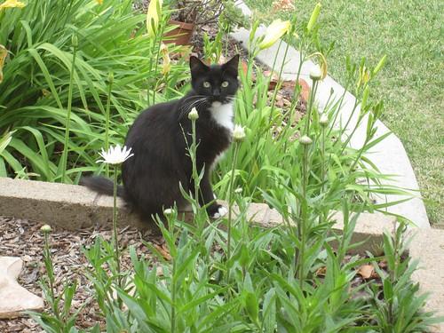 feline visitor
