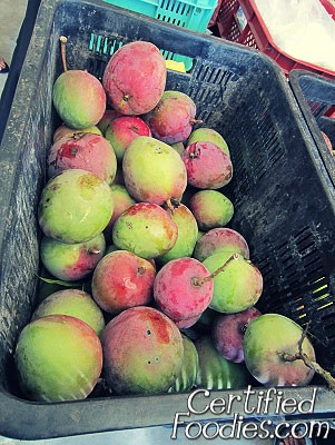 Mangoes straight from the Ayala Westgrove Heights' Orchard - CertifiedFoodies.com