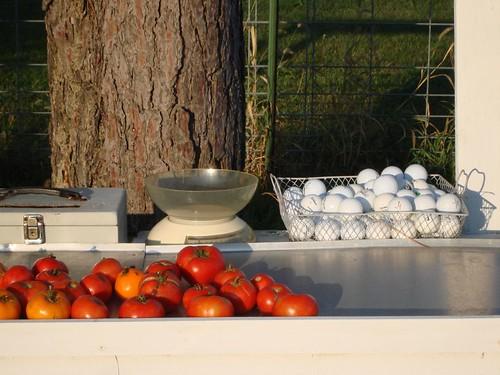 Tomatoes $1/lb