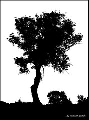 Off for a few days (Kirsten M Lentoft) Tags: bw white black tree duotone blueribbonwinner impressedbeauty momse2600 ysplix kirstenmlentoft