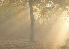Morning sun. (abac077) Tags: autumn sun tree fall nature fog sunrise soleil 77 arbre brouillard brume rayons matin seineetmarne