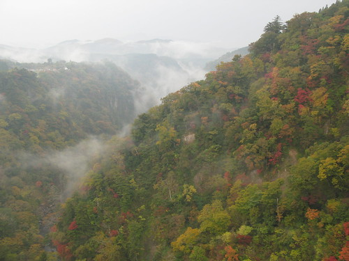 autumn colour of leaves