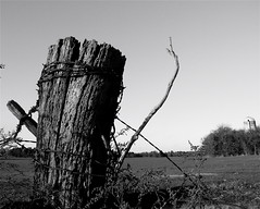 (mightyquinninwky) Tags: wood trees blackandwhite bw green rural fence weeds rust dof post bokeh kentucky farmland silo pasture barbedwire backroads fencepost westernkentucky winterwheat sloughs ohiorivervalley hendersoncounty ohiorivercity hendersoncountykentucky goldstaraward genevakentucky