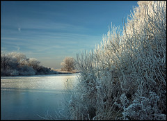 FROZEN 'SPUI' (ESOX LUCIUS) Tags: christmas winter holland ice frost hoarfrost taco stellendam spui canoneos1dsmark3