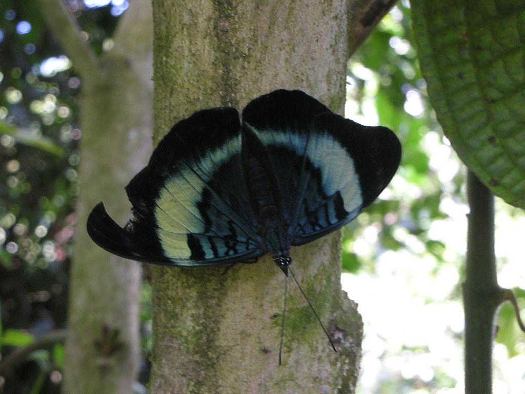 Bitten butterfly