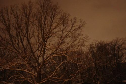 oz trees