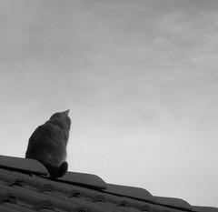 thinkin' (ou: mes parents ont karsheris le toit) (2.) Tags: white black france gris chat du thinking monde toit ta tuile mecanique pense mre sensi thinkin