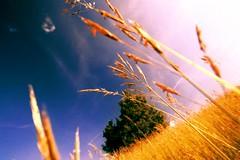 Dalla Terra al Cielo (www.mishacattabiani.com) Tags: sky nature landscape cross earth ground natura cielo campo process terra paesaggio oro astia potofgold naturewatching appenninoparmense parcodei100laghi stunningphotos beautifulcaptureopenforall sognidreams wowphotopost1award3 bestcasescenerypost2award2 colourvisionspleasevoteforthe2contest