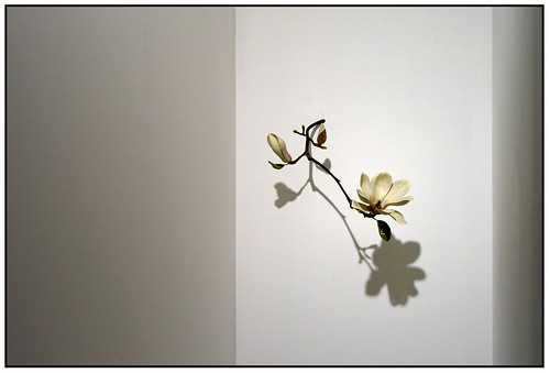 Wooden Flower Sculpture by Yoshihiro Suda