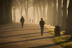 Tree-lined Avenue (Mike Ashton) Tags: road park morning trees dog sunlight mist shropshire path walk litter avenue walkers bigpicture2008