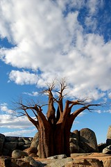 arbol (Marta S. Gufstasson) Tags: sky espaa naturaleza tree nature valencia clouds landscape arbol zoo spain paisaje cielo nubes baobab zologico cruzadas bioparc superbmasterpiece diamondclassphotographer explorewinnersoftheworld goldcruzadas