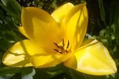 Attimi gialli (Elanorya) Tags: flower verde green nature yellow foglie erba giallo cellulare terra fiore acqua aria giardino particolare orto svago