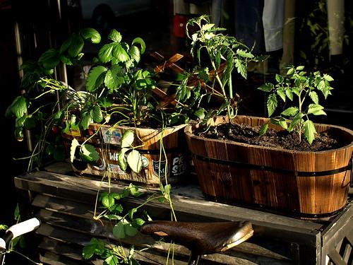 2008-05-15 Gardening