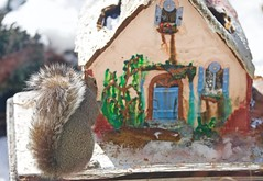 O thank you Lord! (ineedathis, Everyday I get up, it's a great day!) Tags: storybookhome prayingsquirrel graysquirrel eating easterngraysquirrel sciuruscarolinensis treesquirrel garden 2016gingerbreadhouse snowman frontentrance window eave roof royalicing bricks gingerbreadhouse christmas snow flowers miniature sugarwork modeling baking nikond750 closeup glitter fairytalecottage weepingatlascedar tree ornamentaltree outdoor gumpaste