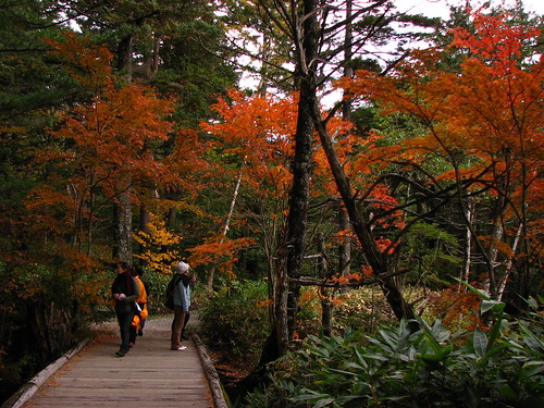 The Forest Path towards Miyojin Pond.