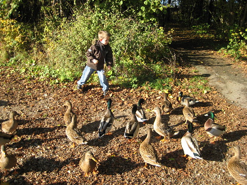 Magnus and the ducks