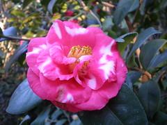 P2240008.JPG (Gail Chris Spinks) Tags: florafauna