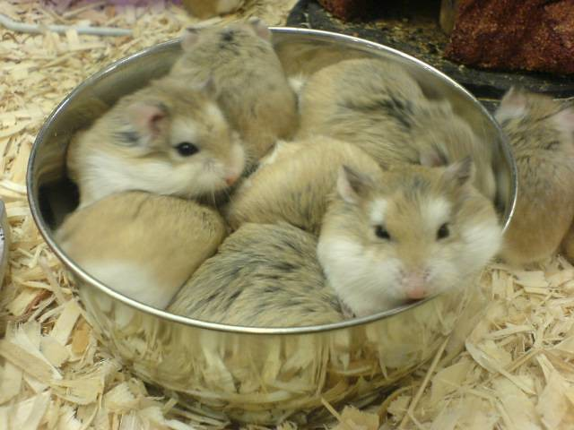 Hamsters at Petsmart. Pick me! Pick Me!