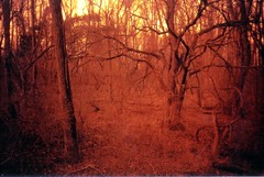 spooky forest (Meleager) Tags: film forest train woods olympus spooky xa olympusxa redscale autaut