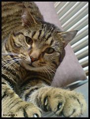 Pico (slow_brains) Tags: cat gatto cuscini