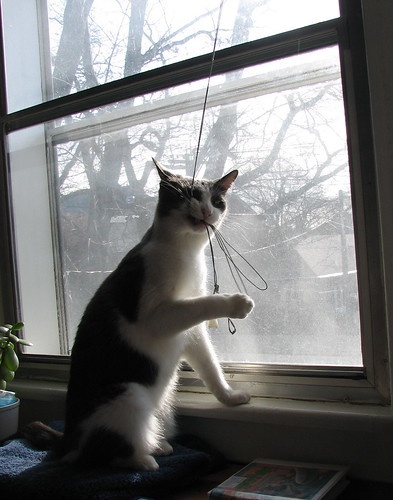Elwood eating the cord for the window blind