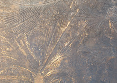 Fern frost 6 (vaneramos) Tags: winter ice frost fernfrost